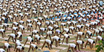 Yoga training to reduce stress to policemen in Chennai Metropolitan Police