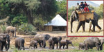 How did the elephant camp in Mudumalai evolved?