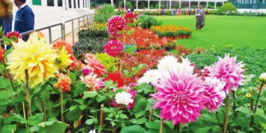 Floral decoration in 15,000 pots at Ooty Botanic Gardens ahead of the second season