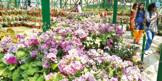 The flower blossoms in the botanical garden of the state