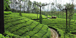 Valparai Tourist attractions untiring watch
