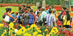 'Cool' in Kodaikanal Summer Festival with hundreds of millions of flowers Launches Tomorrow