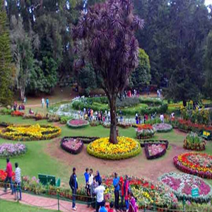 The pleasant climate and an increase in tourists visiting Ooty