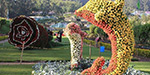Yercaud Flower Show at 25, going on 26 in