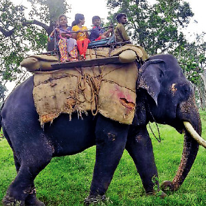 Tourists are enthusiastic to ride the elephant in the Teppakkad camp