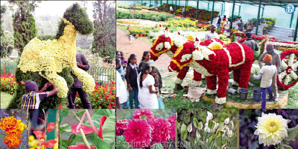 Start today with the Summer Festival Flower Show in Yercaud