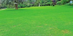 Opening of Botanical Gardens Grass Ground for Tourists