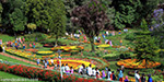 With 3 million flowers festivity: Ooty Flower Show Opener