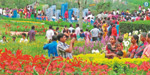 Ooty Flower Show at the Summer Festival in Kodaikanal